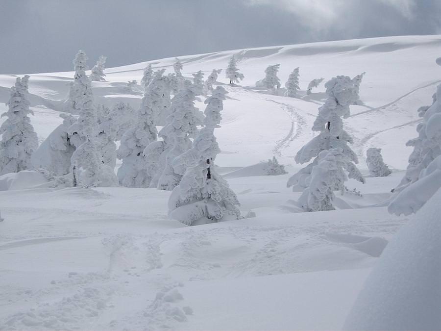 sciare-japan