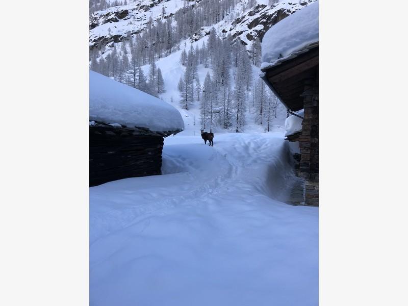 cascata di patrì guide alpine proup (3)