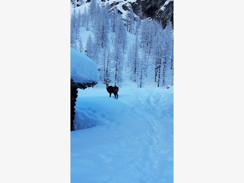 cascata di patrì guide alpine proup (36)